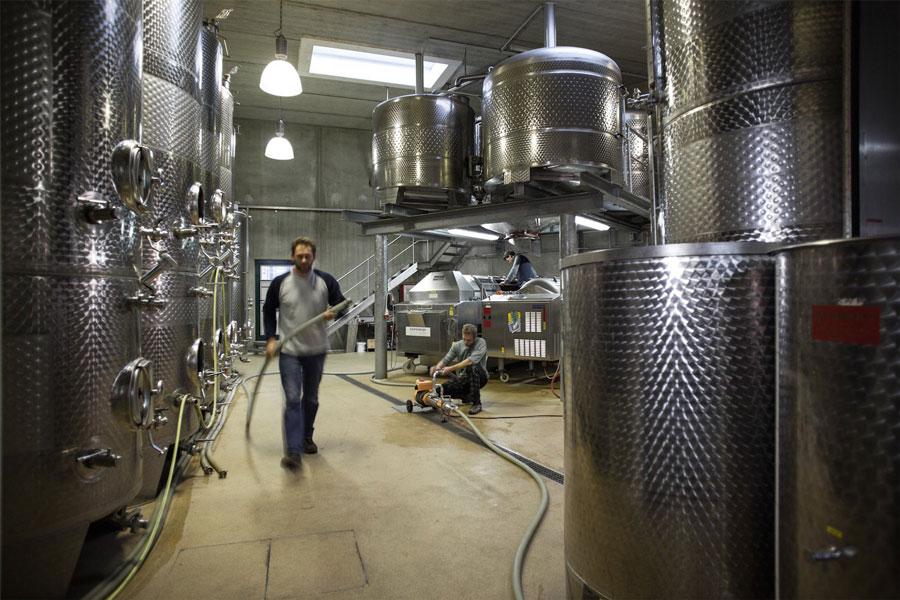 Grüner Veltliner Weine aus Langenlois Hiedler Weinkeller