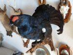 Dekoration für Gastronomie: Jagdtrophäen zu verkaufen