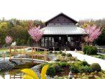 Bad Erlach: Linsberg Asia lädt zum Japanischen Kirschblüten-Tischpicknick