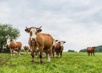 Transgourmet Vonatur Gastronomie Nachhaltigkeit