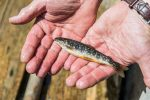 Transgourmet Vonatur: Perfekte Fischqualität aus Mariazell
