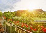 Tourismus Niederösterreich: Auslandsgäste sorgen für hohe Zuwächse