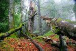 Nationalpark Kalkalpen: Buchenwälder als Weltnaturerbe
