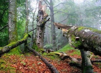 Natur entdecken im Nationalpark Kalkalpen