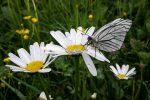 Alpbachtal Seenland Tirol: Wanderungen im Tal der Schmetterlinge