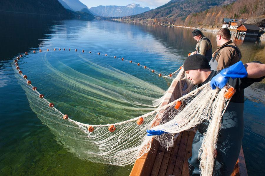 Wildfisch Nachhaltigkeit Gastronomie Fischer beim Einholen des Netzes Grundlsee