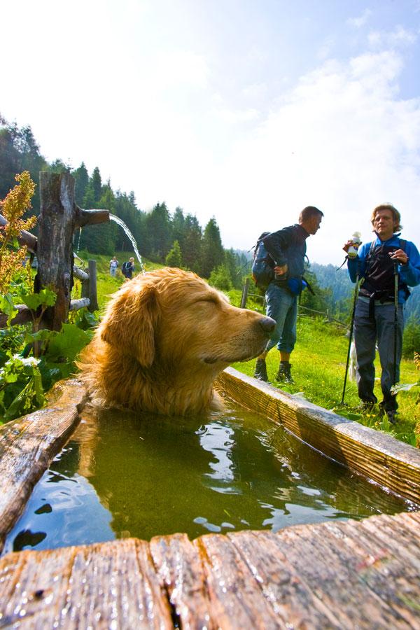 Steiermark Urlaub mit Hund Gipfelwanderung Murtal