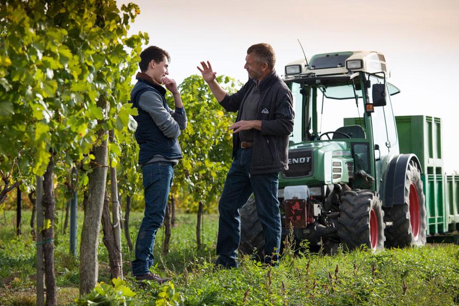 Grüner Veltliner Weine aus Langenlois Hiedler