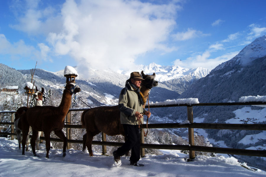 Kulinarische Wanderungen Trekkingtouren Lamatrekking Horst Kuster Montafon Tourismus GmbH