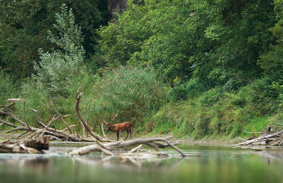 Neue Studie Urlaubsverhalten Österreicher Nationalpark-Donau-Auen
