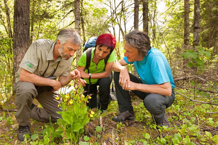 Natur-Abenteuer in den Nationalparks Orchideenwanderung im Nationalpark Gesäuse