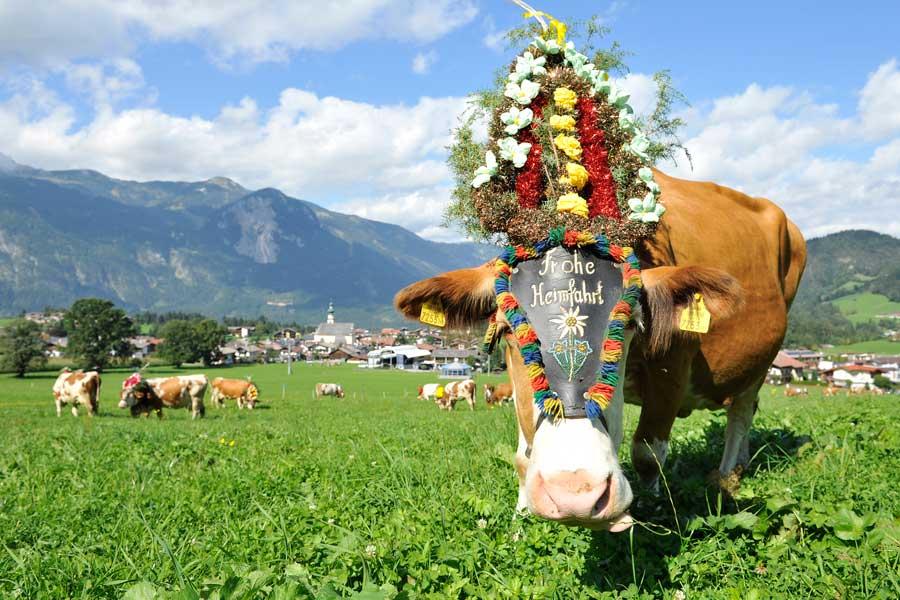 Almabtrieb Reith Alpbachtal Bauernmarkt