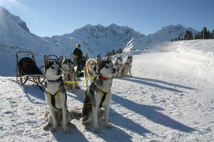 Familienurlaub in Vorarlberg mit dem Husky unterwegs