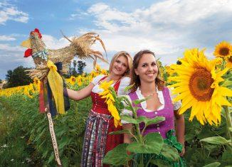 Vernetzung Gastronomie Landwirtschaft Bucklige Welt