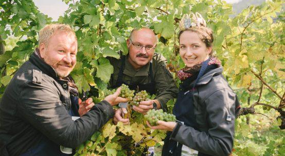 Weinlesen für den guten Zweck in Rossatz