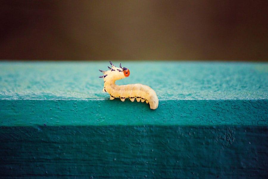 Insektenküche der anderen Art