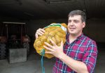 Transgourmet Vonatur: Bio-Erdäpfel aus dem Mühlviertel