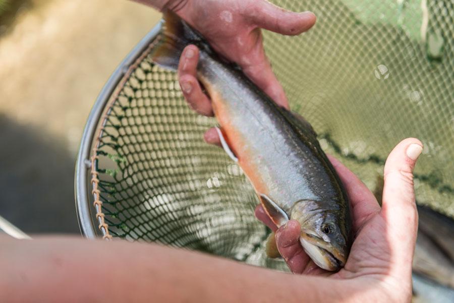 Bis zu 60 Fischsorten sind bei Transgourmet im Ganzen erhältlich.