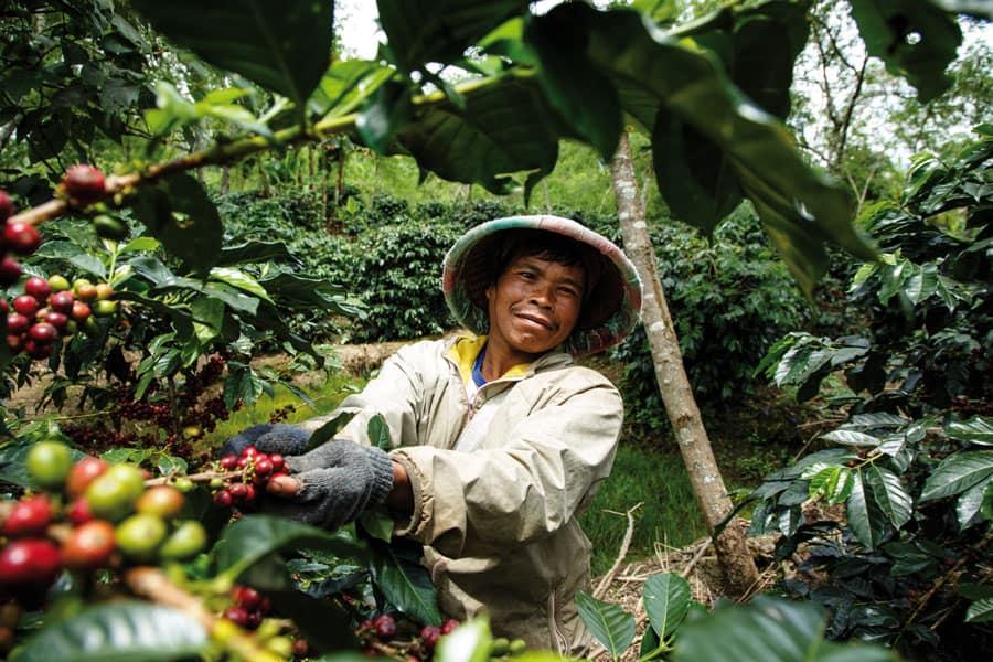 Kaffee fair gehandelt für Gastronomie