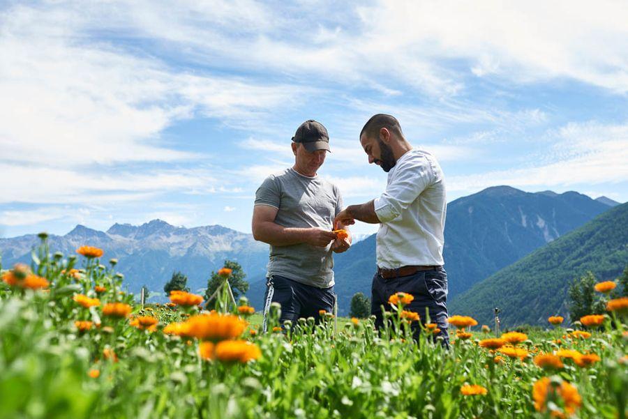 Bio-Teespezialitäten Auf den Bergwiesen von Hansjörg Oberdörfer (l.) im Südtiroler Vinschgau gedeihen 30 unterschiedliche Kräuter, die Axel Brunoni (r.) und Simon Raffeiner in ihrem Unternehmen monthea Bio Tee zu Teespezialitäten weiterverarbeiten.