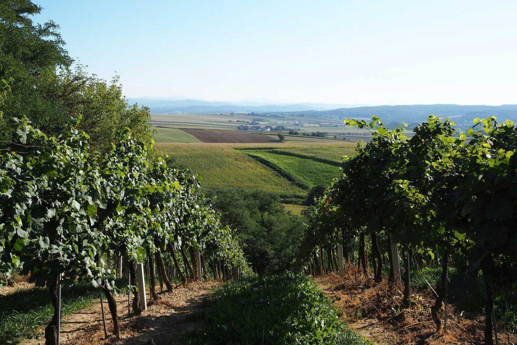 Weinviertel will Tourismus-Marke werden